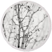 The Winter Pear Tree In Black And White Round Beach Towel