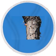 The Woodpecker Is In Round Beach Towel