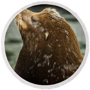 Things Are Looking Up-sealion Round Beach Towel