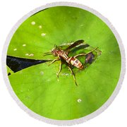 Thirsty Bee On Waterlily Round Beach Towel