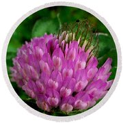 Thistle Beauty Round Beach Towel