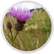 Thistle In A Swiss Field Round Beach Towel