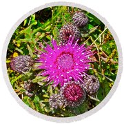Thistle In Saint Mary's Ecological Reserve-newfoundland Round Beach Towel
