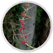 Thorns And Blooms Round Beach Towel