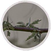 Thorns Of The Acacia Tree Round Beach Towel
