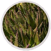 Thorns On Succulent Round Beach Towel