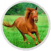 Thoroughbred Filly Round Beach Towel