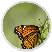 Those Magnificent Monarchs - Danaus Plexippus Round Beach Towel