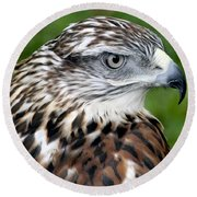 The Threat Of A Predator Hawk Round Beach Towel