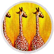 Three Amigos Giraffes Looking Back Round Beach Towel