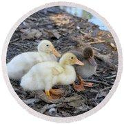 Three Baby Ducks Round Beach Towel