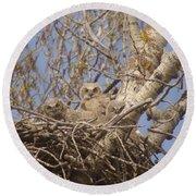 Three Baby Owls  Round Beach Towel