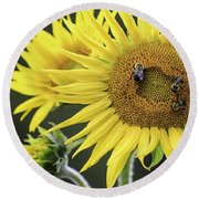 Three Bees On A Sunflower Round Beach Towel