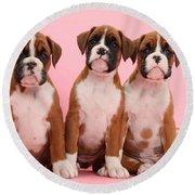 Three Boxer Puppies Round Beach Towel