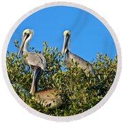 Three Brown Pelicans Round Beach Towel