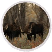 Three Bull Moose Sparring Round Beach Towel
