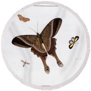 Three Butterflies And A Gnat Round Beach Towel