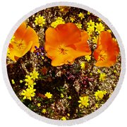 Three California Poppies Among Goldfields In Antelope Valley California Poppy Reserve Round Beach Towel