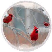 Three Cardinals In A Tree Round Beach Towel