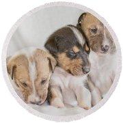 Three Collie Puppies Round Beach Towel by Martin Capek