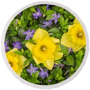 Three Daffodils In Blooming Periwinkle Round Beach Towel