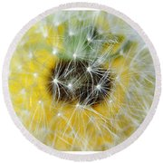 Three Dandelions In A Line Round Beach Towel