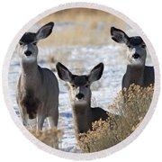 Three Deer Round Beach Towel