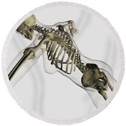 Three Dimensional View Of Female Spine Round Beach Towel by Stocktrek Images