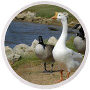 Three Geese Just Srolling Along Round Beach Towel