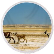 Three Goats In A Desert Round Beach Towel