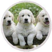 Three Golden Retriever Puppies Round Beach Towel
