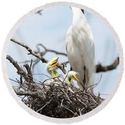 Three Great Egret Chicks In Nest Round Beach Towel by Carol Groenen