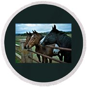 Three Horses Waiting For Carrots Round Beach Towel