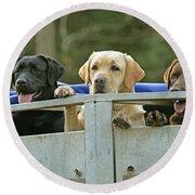 Three Kinds Of Labradors Round Beach Towel
