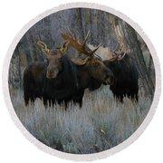 Three Moose In The Woods Round Beach Towel