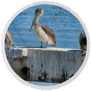 Three Pelicans Round Beach Towel