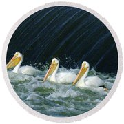 Three Pelicans Hanging Out  Round Beach Towel