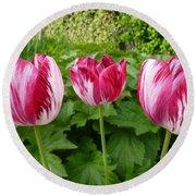 Three Pink Rembrandt Tulips Round Beach Towel