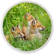 Three Red Fox Pups Round Beach Towel