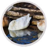 Three Sleeping Ducks Round Beach Towel