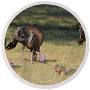 Three Toms And A Squirrel Round Beach Towel