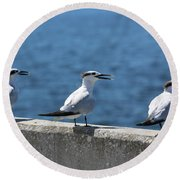 Three Turning Terns Round Beach Towel