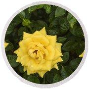 Three Yellow Roses In Rain Round Beach Towel