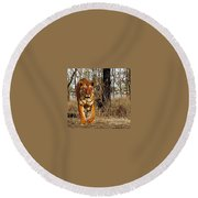 Tiger 1 Round Beach Towel