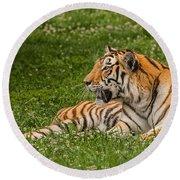 Tiger At Rest 3 Round Beach Towel