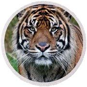 Tiger Stripes Round Beach Towel
