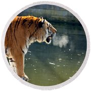 Tiger Breathing Into Cold Air By The Water Round Beach Towel
