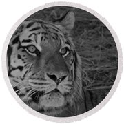 Tiger Bw Round Beach Towel