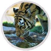 Tiger Drinking Water Round Beach Towel