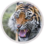 Tiger Growl Round Beach Towel